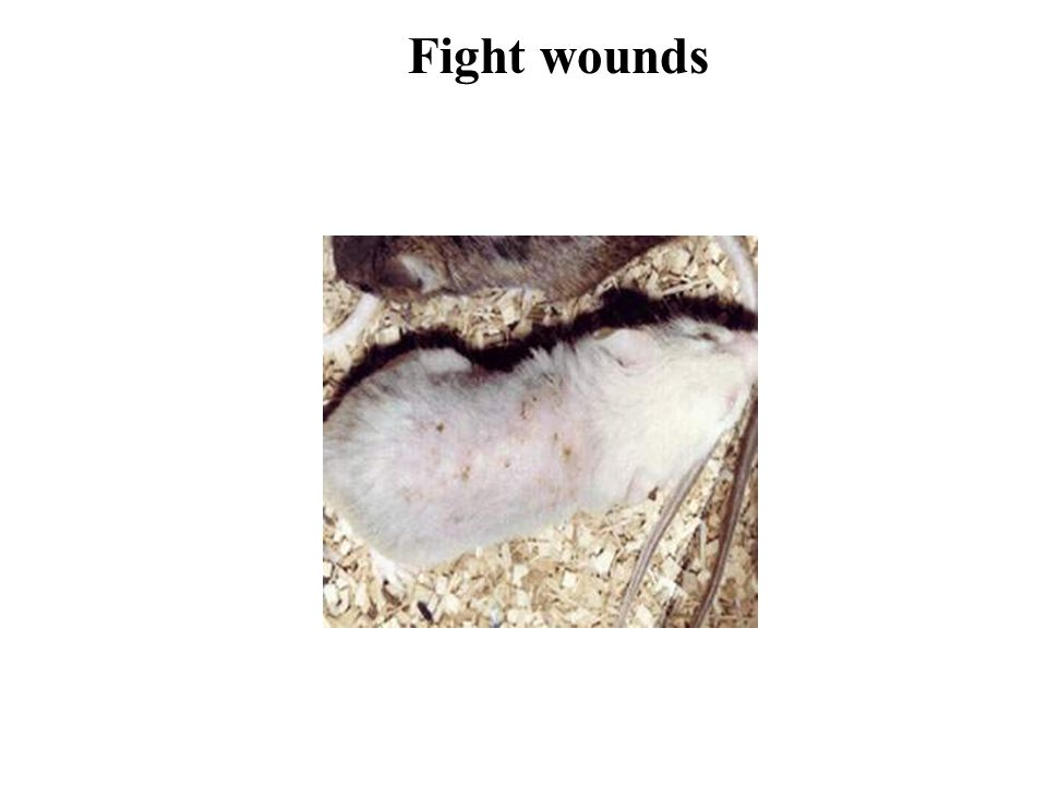 Fight wounds