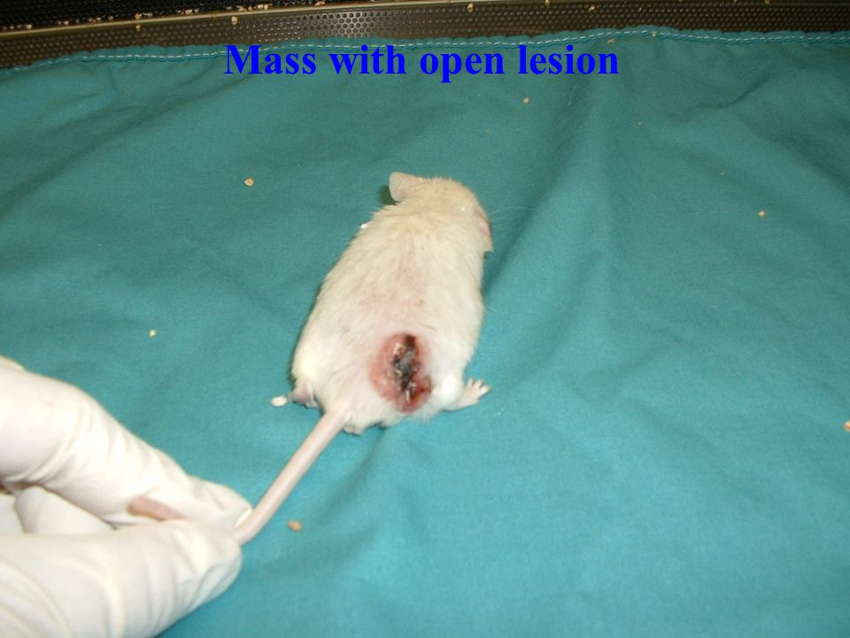 Mass with open lesion
