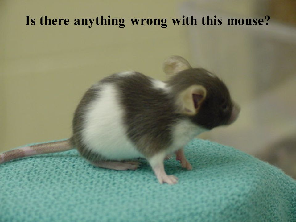 Is there anything wrong with this mouse