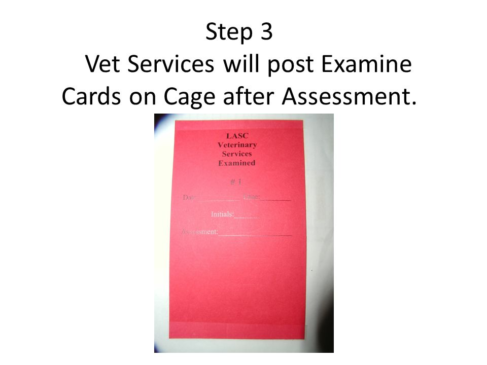 Step 3 Vet Services will post Examine Cards on Cage after Assessment.