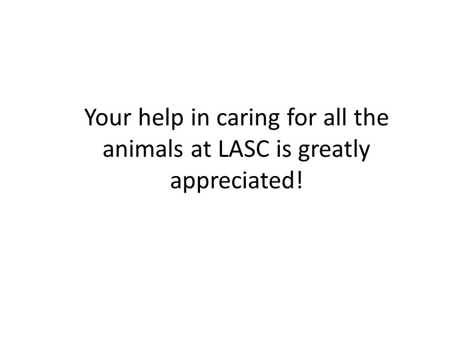 Your help in caring for all the animals at LASC is greatly appreciated!