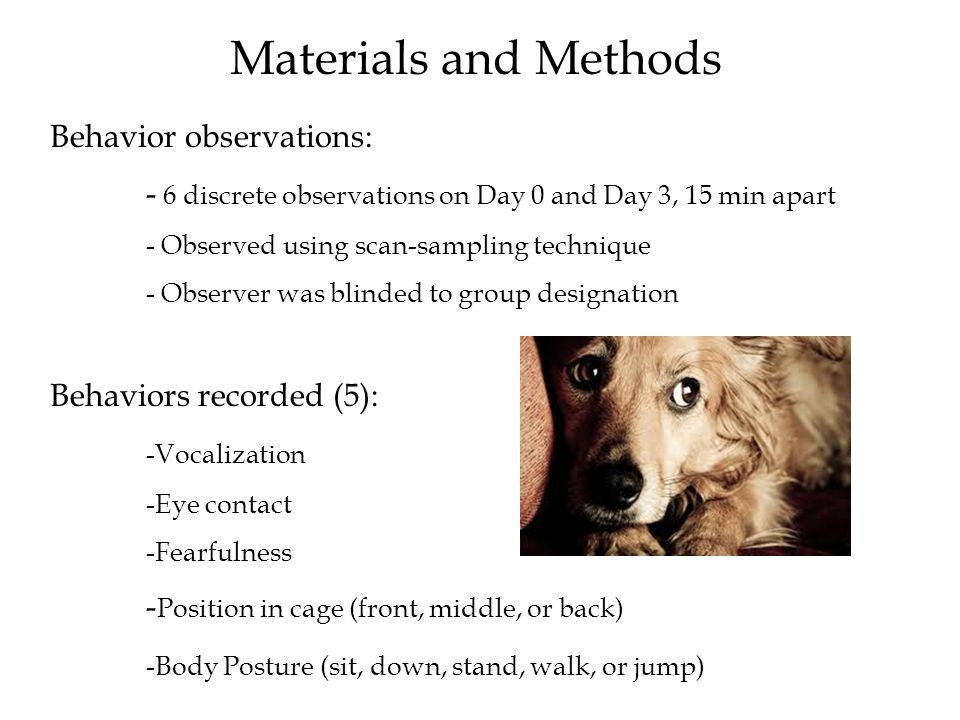 Materials and Methods Behavior observations: - 6 discrete observations on Day 0 and Day 3, 15 min apart - Observed using scan-sampling technique - Observer was blinded to group designation Behaviors recorded (5): -Vocalization -Eye contact -Fearfulness - Position in cage (front, middle, or back) -Body Posture (sit, down, stand, walk, or jump)