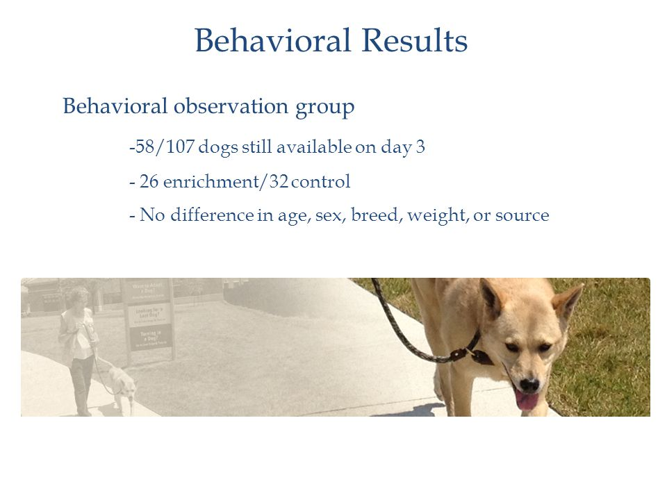 Behavioral observation group -58/107 dogs still available on day 3 - 26 enrichment/32 control - No difference in age, sex, breed, weight, or source Behavioral Results