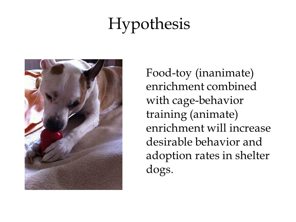 Hypothesis Food-toy (inanimate) enrichment combined with cage-behavior training (animate) enrichment will increase desirable behavior and adoption rates in shelter dogs.