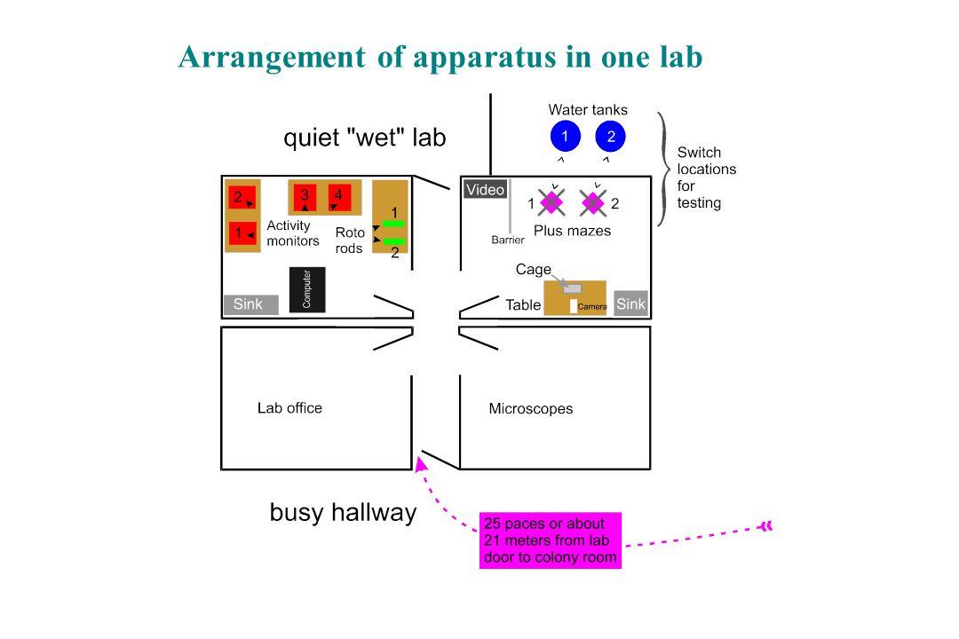 Arrangement of apparatus in one lab