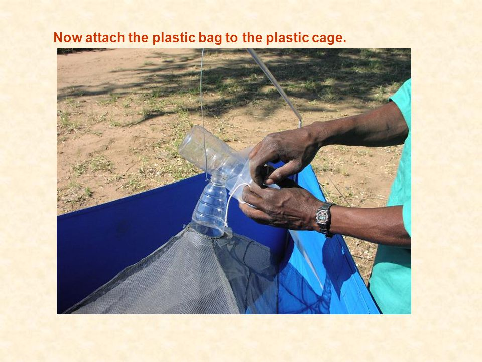 Now attach the plastic bag to the plastic cage.