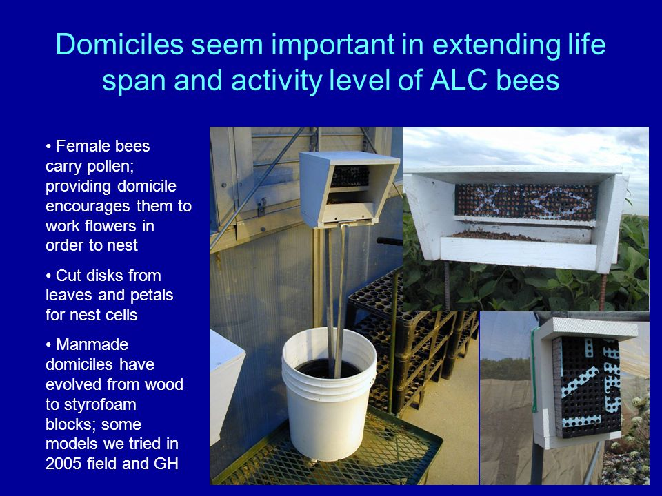 Domiciles seem important in extending life span and activity level of ALC bees Female bees carry pollen; providing domicile encourages them to work fl
