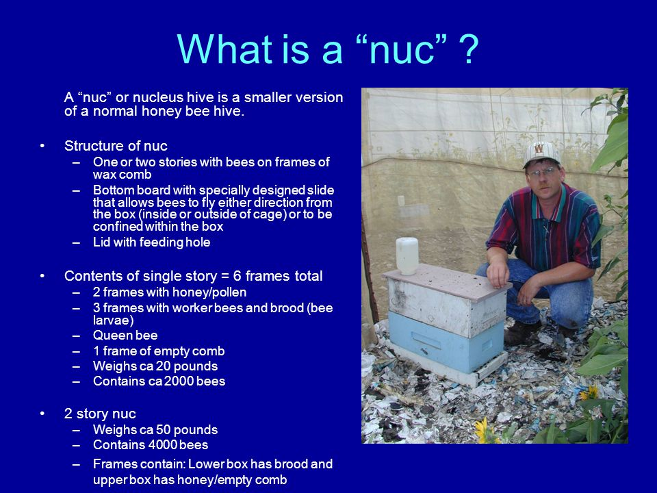 "What is a ""nuc"" ? A ""nuc"" or nucleus hive is a smaller version of a normal honey bee hive. Structure of nuc –One or two stories with bees on frames of"