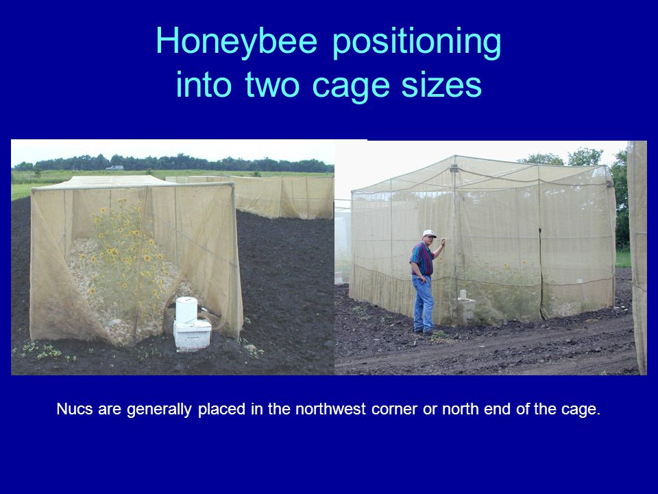 Honeybee positioning into two cage sizes Nucs are generally placed in the northwest corner or north end of the cage.