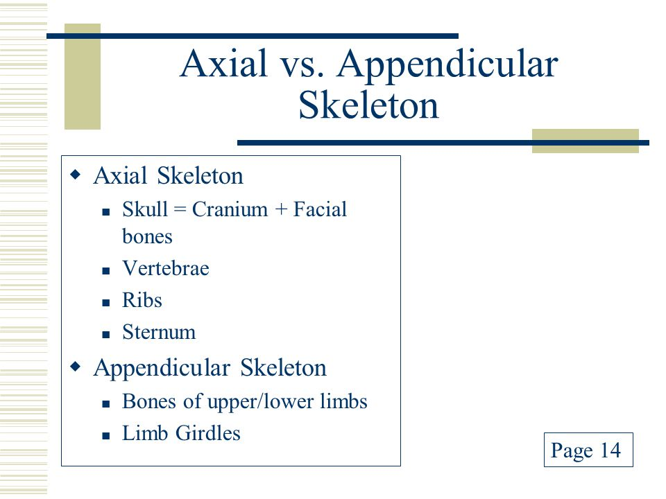 Axial vs. Appendicular Skeleton  Axial Skeleton Skull = Cranium + Facial bones Vertebrae Ribs Sternum  Appendicular Skeleton Bones of upper/lower li