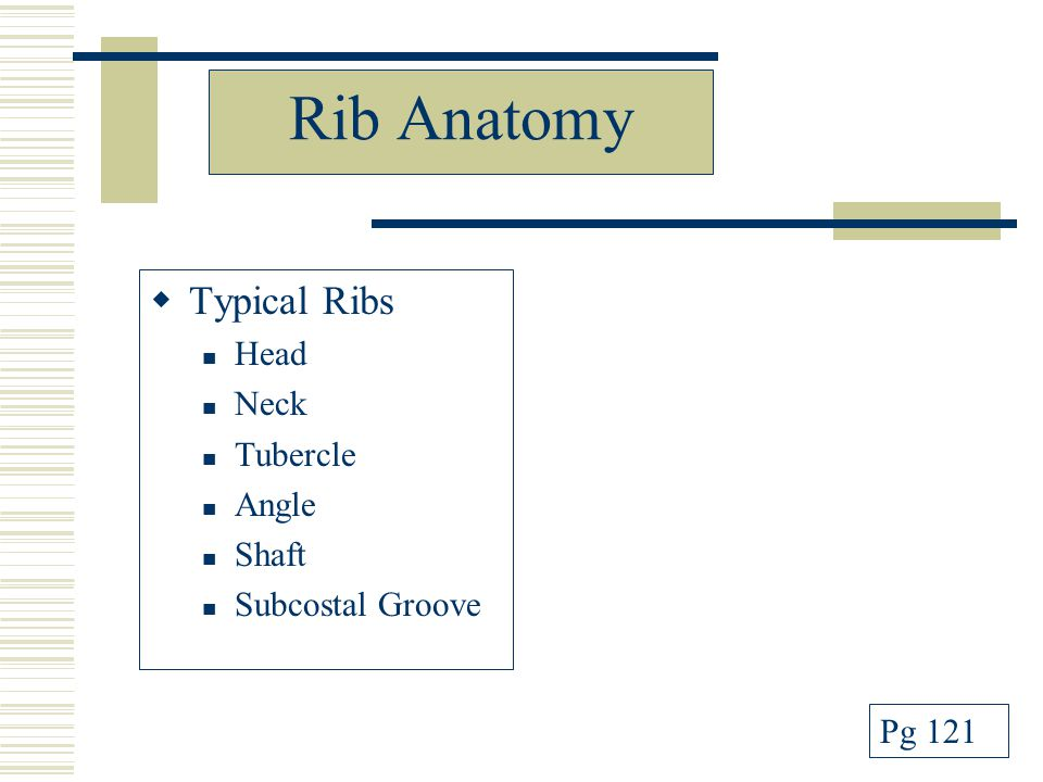 Rib Anatomy  Typical Ribs Head Neck Tubercle Angle Shaft Subcostal Groove Pg 121