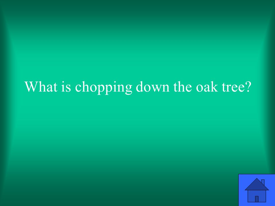 What is chopping down the oak tree