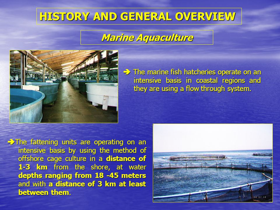 HISTORY AND GENERAL OVERVIEW Marine Aquaculture  The fattening units are operating on an intensive basis by using the method of offshore cage culture in a distance of 1-3 km from the shore, at water depths ranging from 18 -45 meters and with a distance of 3 km at least between them.