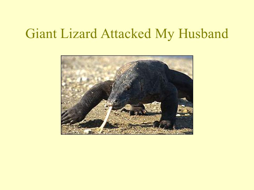 Giant Lizard Attacked My Husband