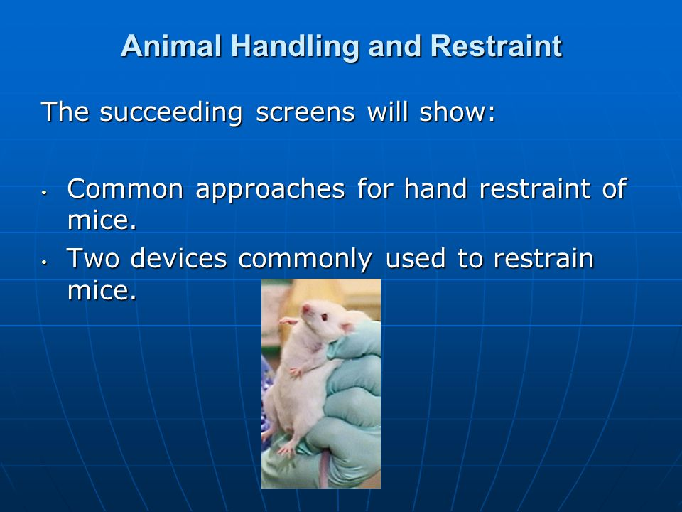 Animal Handling and Restraint The succeeding screens will show: Common approaches for hand restraint of mice. Common approaches for hand restraint of