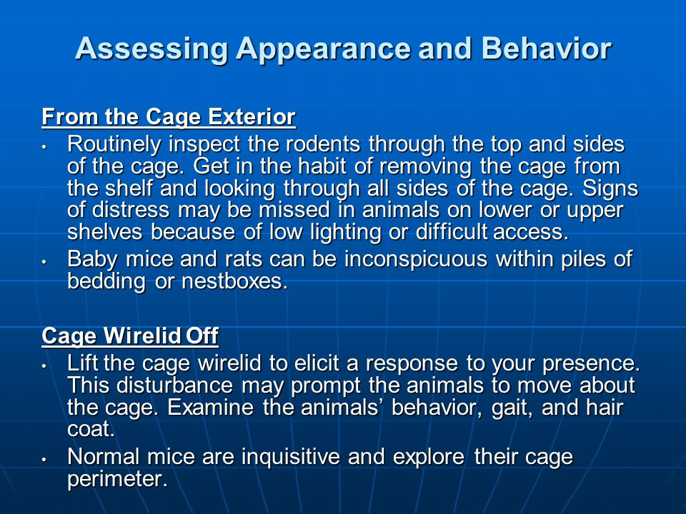 Assessing Appearance and Behavior From the Cage Exterior Routinely inspect the rodents through the top and sides of the cage. Get in the habit of remo