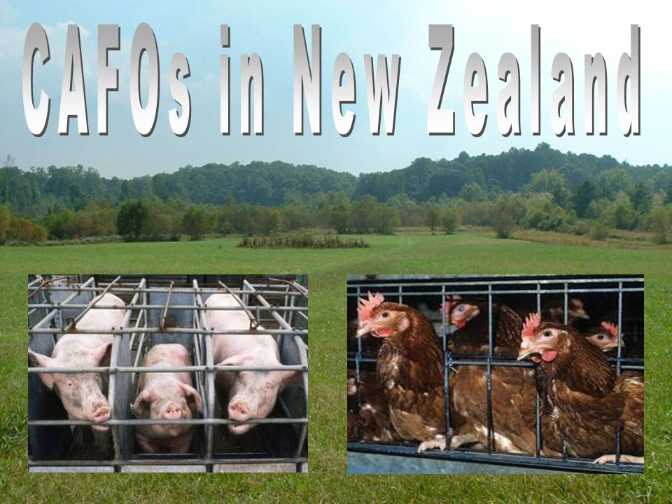CAFO's in New Zealand Done by Jaye