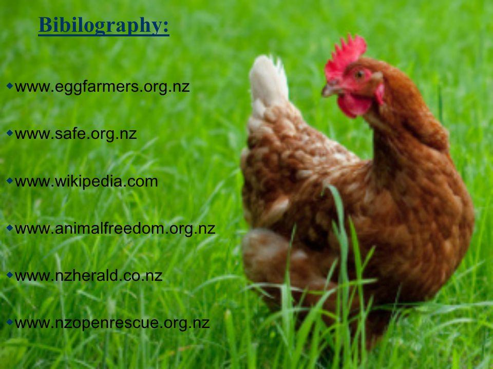 Bibilography:  www.eggfarmers.org.nz  www.safe.org.nz  www.wikipedia.com  www.animalfreedom.org.nz  www.nzherald.co.nz  www.nzopenrescue.org.nz
