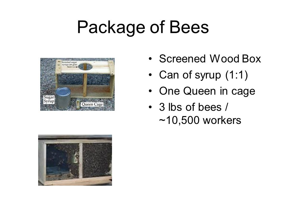 Package of Bees Screened Wood Box Can of syrup (1:1) One Queen in cage 3 lbs of bees / ~10,500 workers