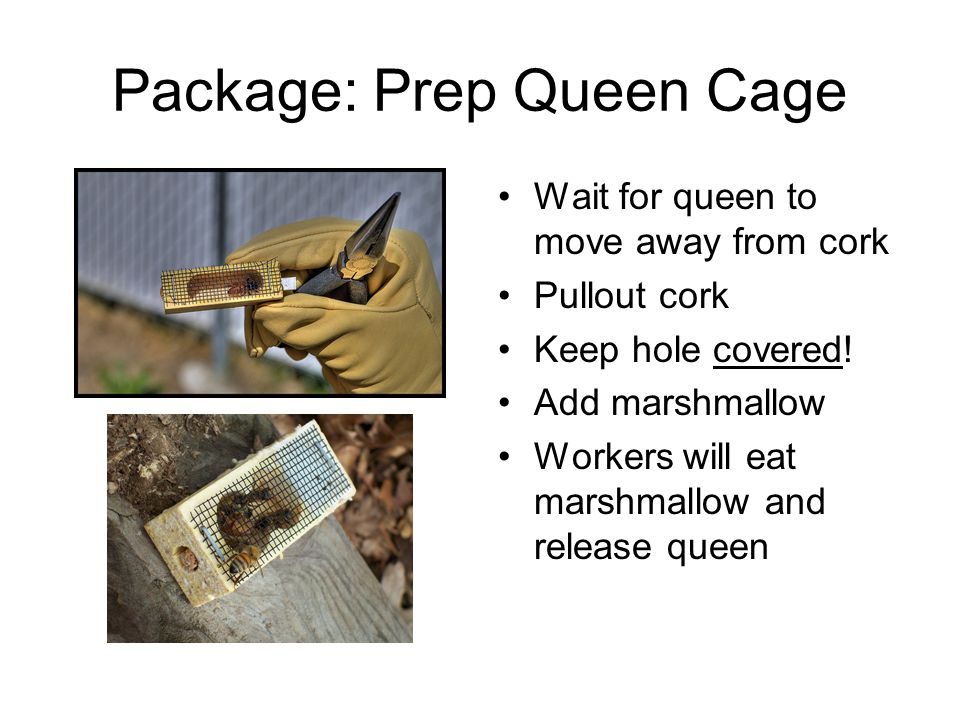 Package: Prep Queen Cage Wait for queen to move away from cork Pullout cork Keep hole covered.