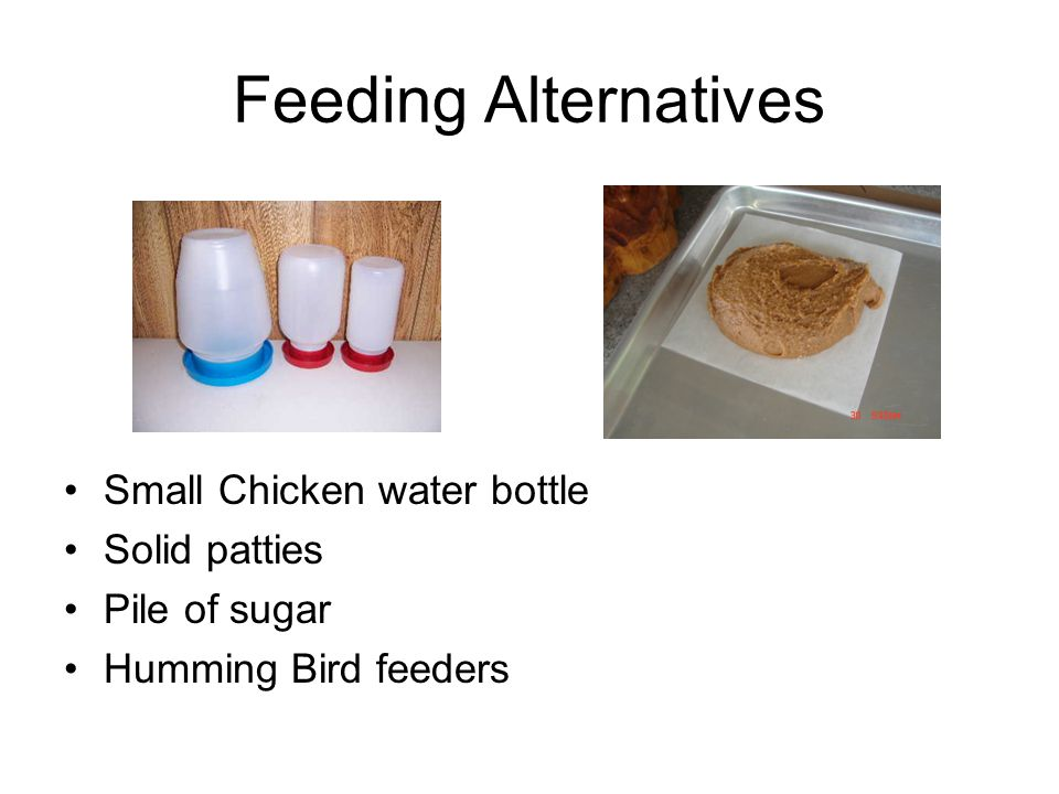 Feeding Alternatives Small Chicken water bottle Solid patties Pile of sugar Humming Bird feeders