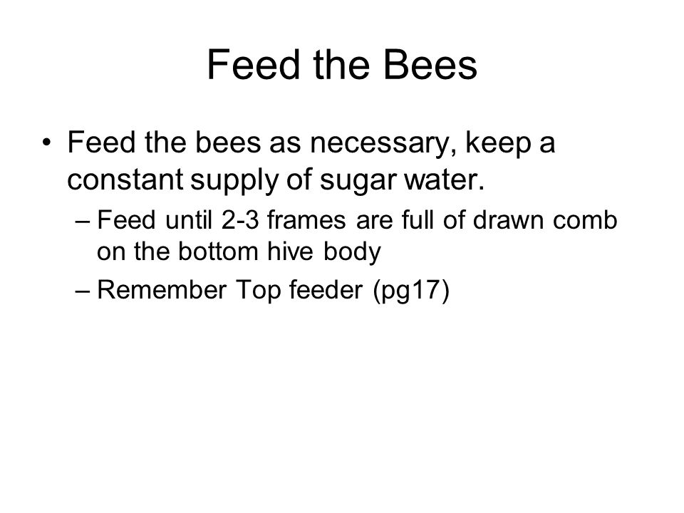 Feed the Bees Feed the bees as necessary, keep a constant supply of sugar water.