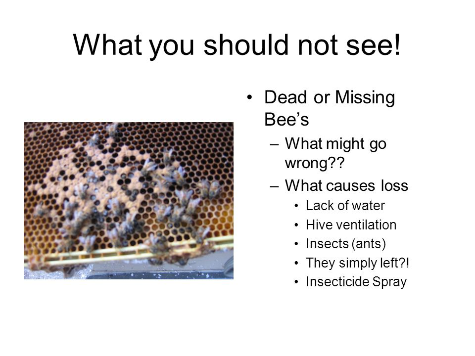 What you should not see. Dead or Missing Bee's –What might go wrong .