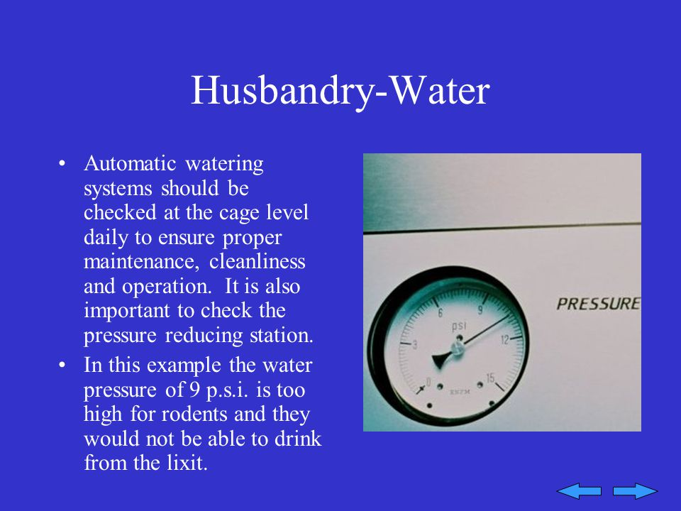 Husbandry-Water Automatic watering systems should be checked at the cage level daily to ensure proper maintenance, cleanliness and operation.