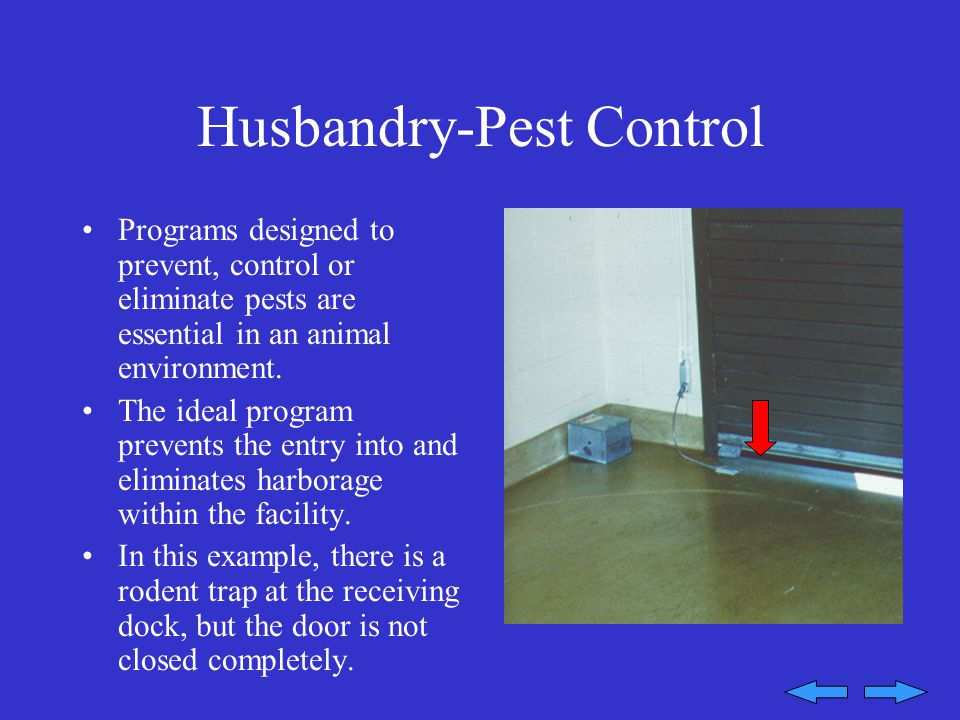Husbandry-Pest Control Programs designed to prevent, control or eliminate pests are essential in an animal environment.