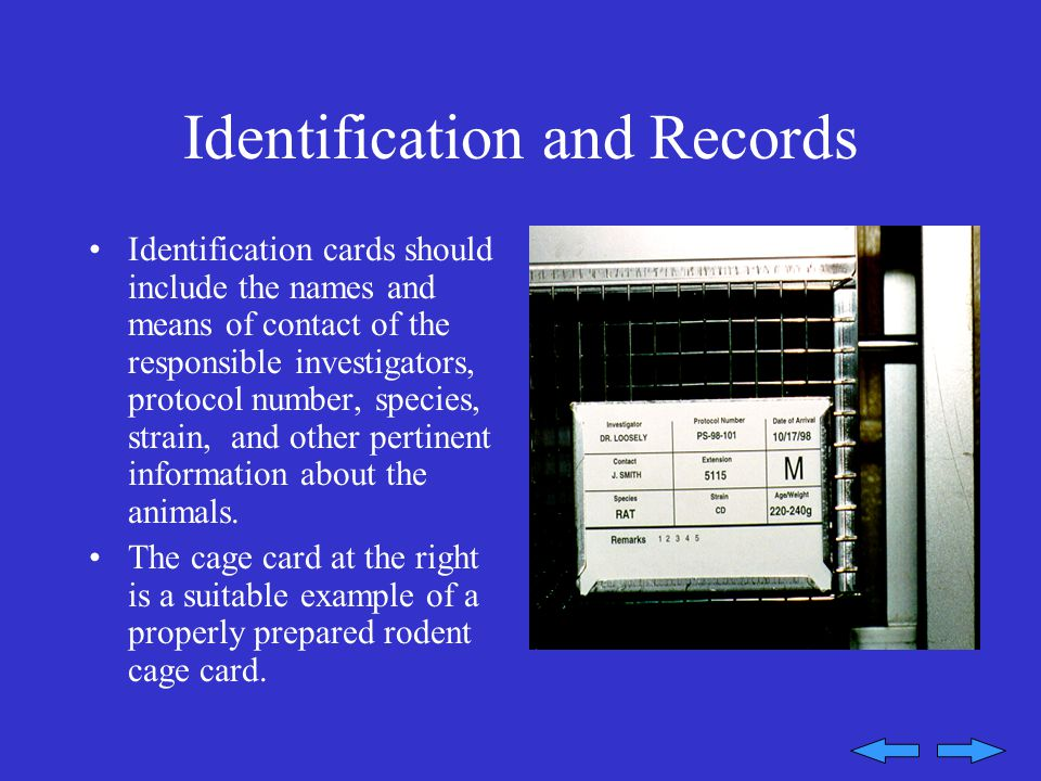 Identification and Records Identification cards should include the names and means of contact of the responsible investigators, protocol number, species, strain, and other pertinent information about the animals.