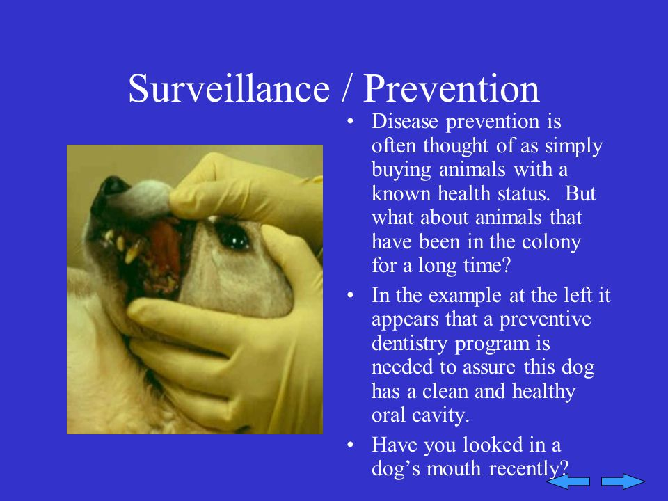 Surveillance / Prevention Disease prevention is often thought of as simply buying animals with a known health status.