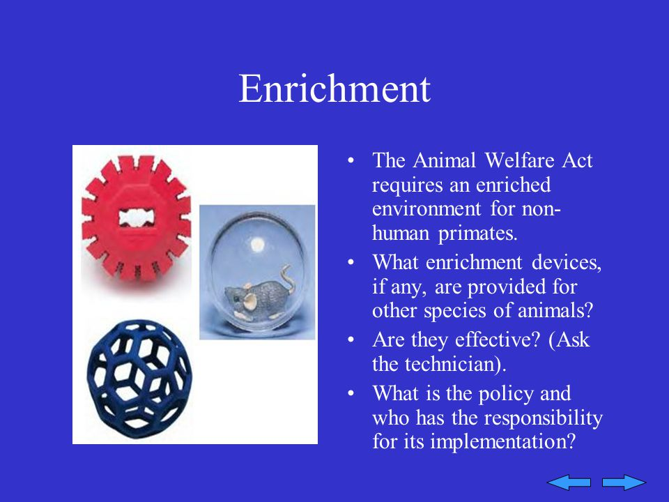 Enrichment The Animal Welfare Act requires an enriched environment for non- human primates.