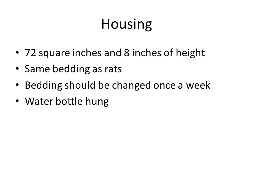 Housing 72 square inches and 8 inches of height Same bedding as rats Bedding should be changed once a week Water bottle hung