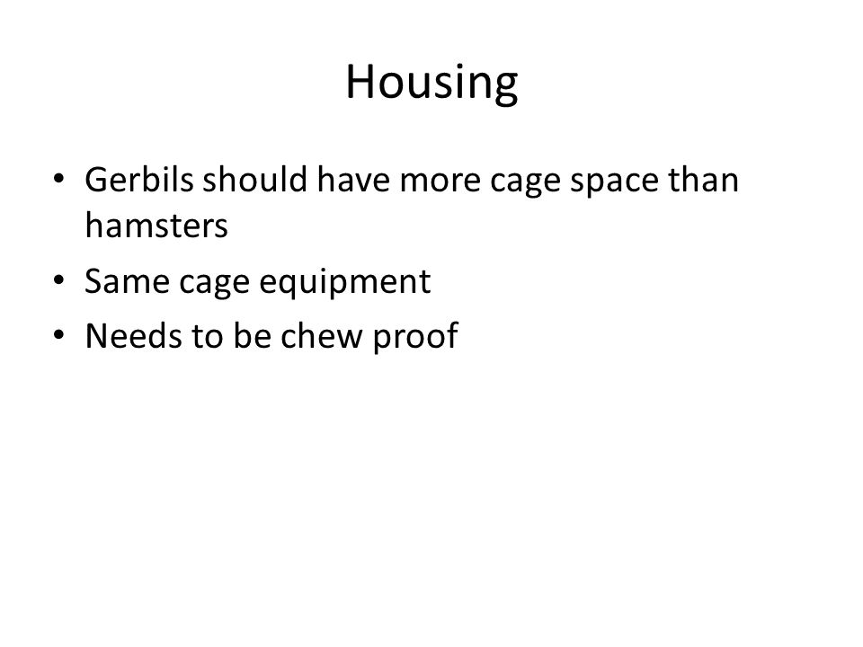 Housing Gerbils should have more cage space than hamsters Same cage equipment Needs to be chew proof