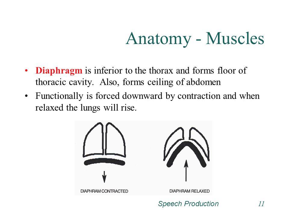 Speech Production10