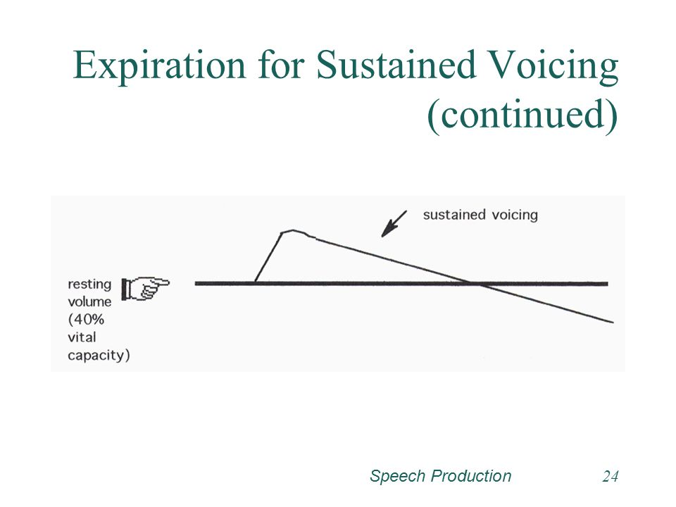 Speech Production23 Expiration for Sustained Voicing (continued) Specifically these muscle are the external intercostal muscles and the interchondral