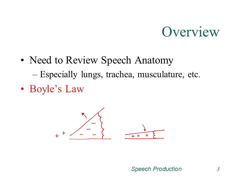 Speech Production3 Overview Need to Review Speech Anatomy –Especially lungs, trachea, musculature, etc.