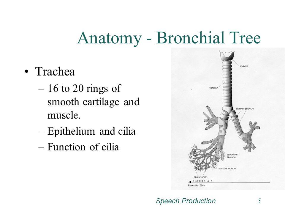 Speech Production15