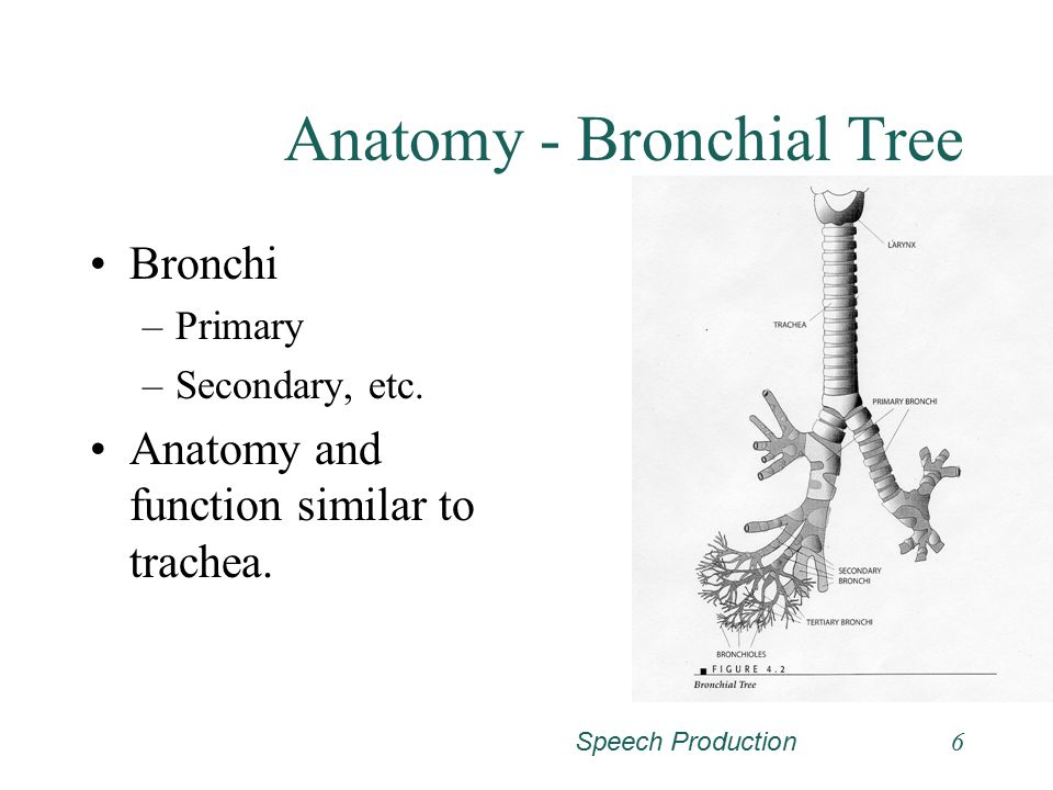 Speech Production26 Conditions that Affect Respiration Parkinson's Disease Cerebellar Disease Cervical Spinal Cord Injury Cerebral Palsy Voice Disorders Hearing Loss
