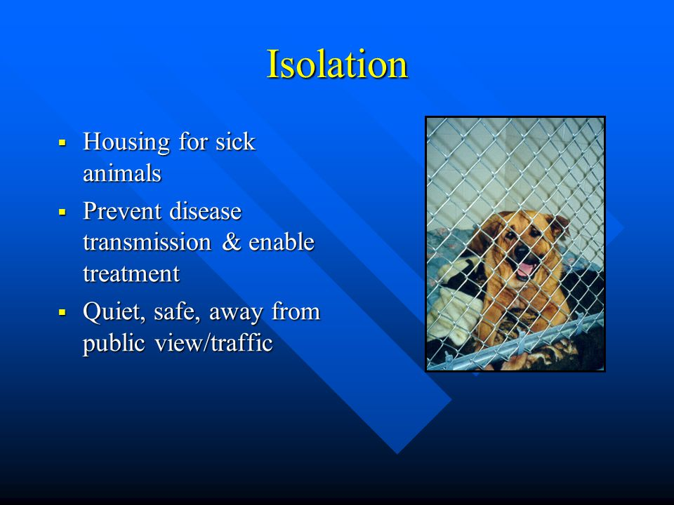 Isolation  Housing for sick animals  Prevent disease transmission & enable treatment  Quiet, safe, away from public view/traffic