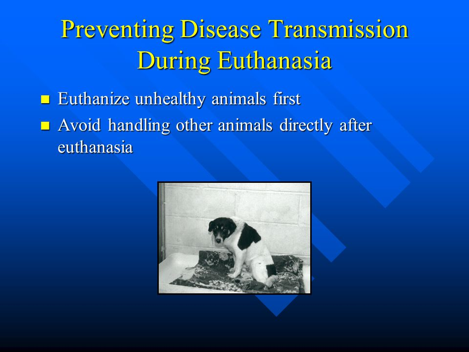 Preventing Disease Transmission During Euthanasia Euthanize unhealthy animals first Euthanize unhealthy animals first Avoid handling other animals dir