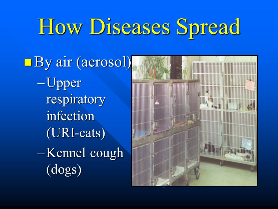 How Diseases Spread By air (aerosol) By air (aerosol) –Upper respiratory infection (URI-cats) –Kennel cough (dogs)