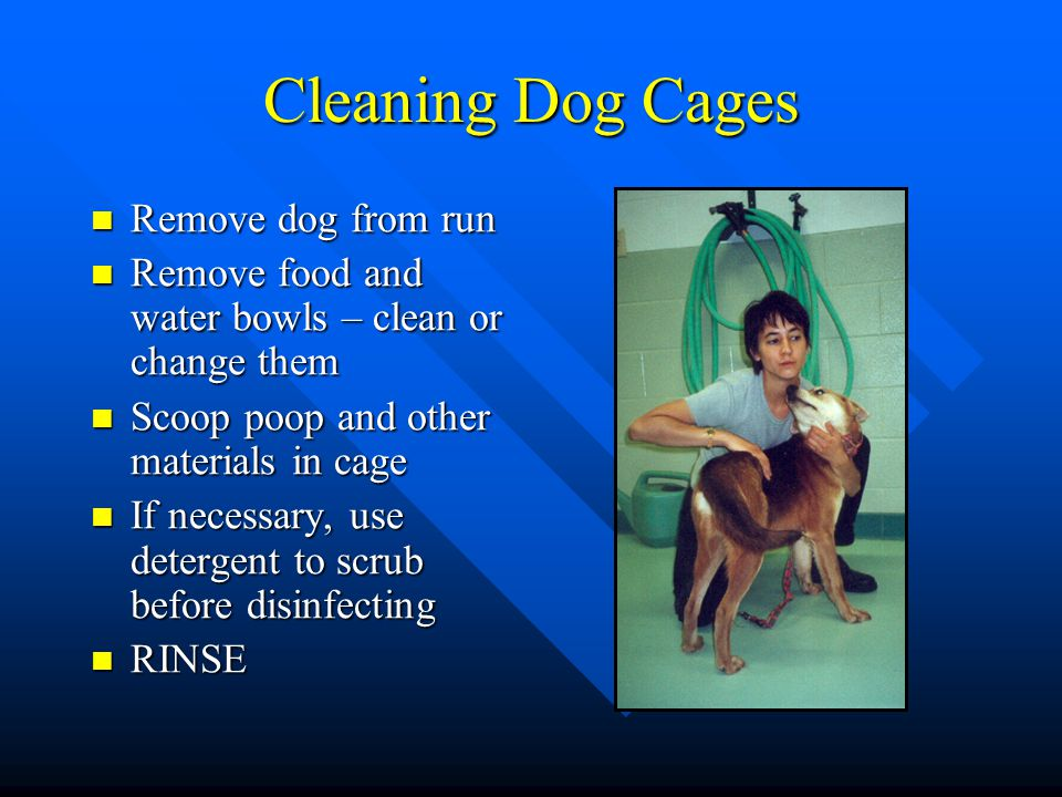 Cleaning Dog Cages Remove dog from run Remove dog from run Remove food and water bowls – clean or change them Remove food and water bowls – clean or c