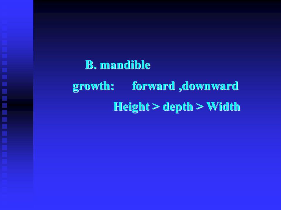 B. mandible B. mandible growth:forward,downward growth:forward,downward Height > depth > Width Height > depth > Width