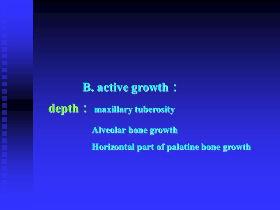 B. active growth : B. active growth : depth : maxillary tuberosity depth : maxillary tuberosity Alveolar bone growth Alveolar bone growth Horizontal p
