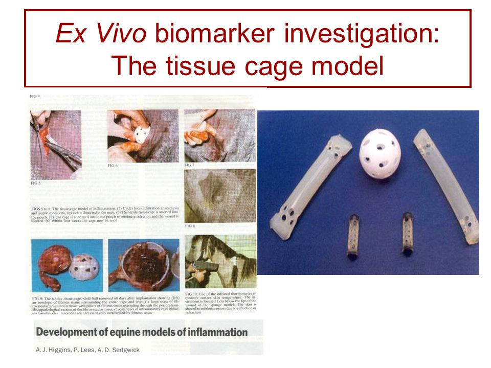 Ex Vivo biomarker investigation: The tissue cage model