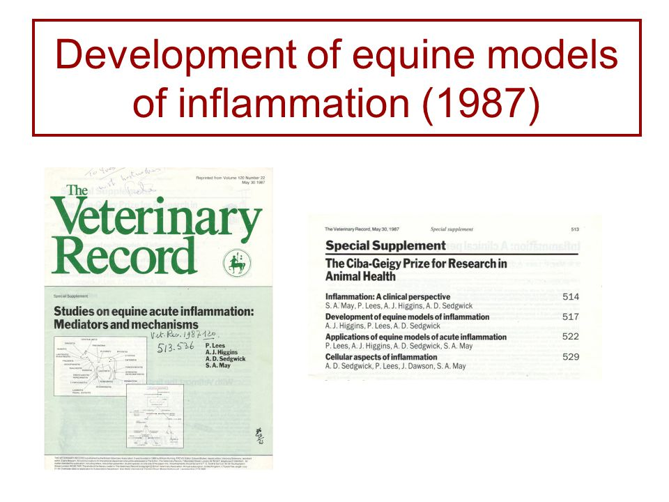 Development of equine models of inflammation (1987)