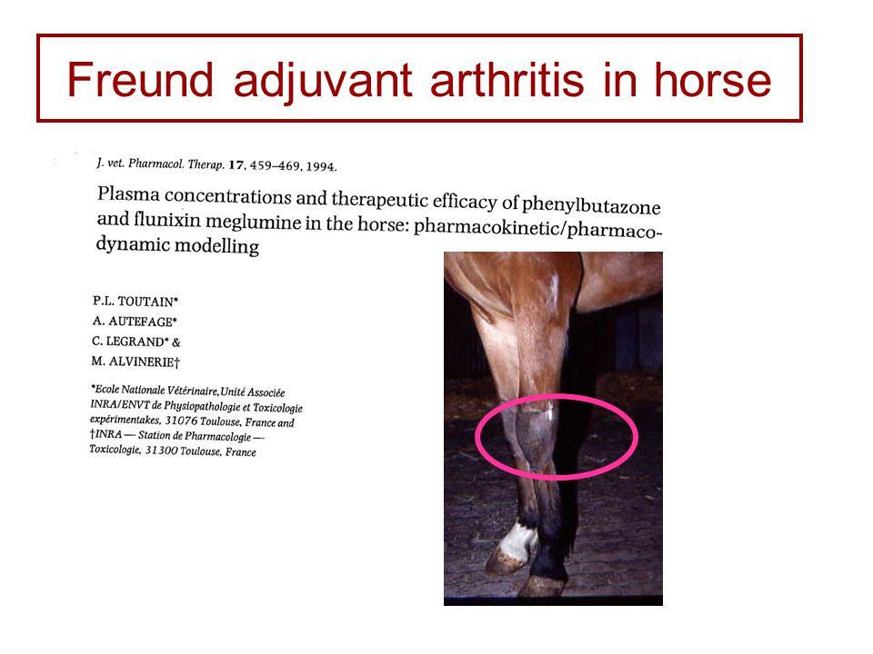 Freund adjuvant arthritis in horse Carpitis