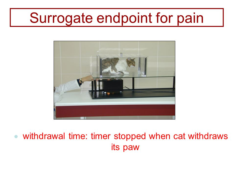  withdrawal time: timer stopped when cat withdraws its paw Surrogate endpoint for pain