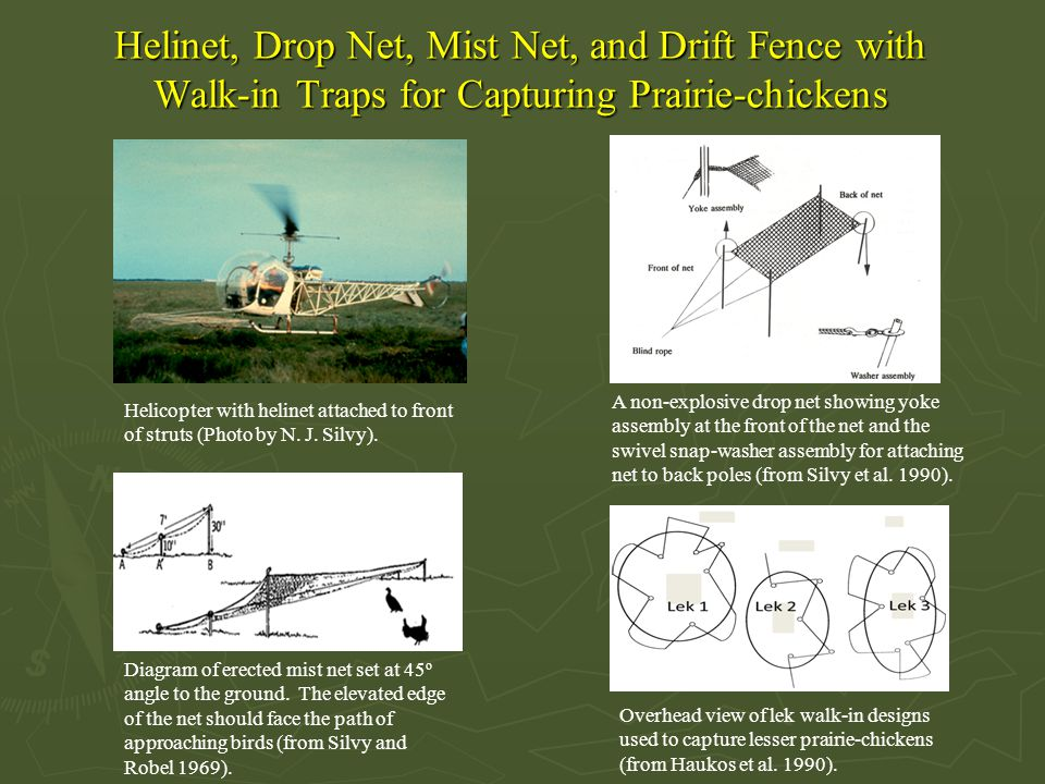 Helinet, Drop Net, Mist Net, and Drift Fence with Walk-in Traps for Capturing Prairie-chickens Diagram of erected mist net set at 45 o angle to the ground.